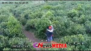 Baru Video Viral Tiktok Kebun Teh Kemuning